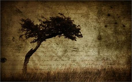 Tree with script background_1.jpg