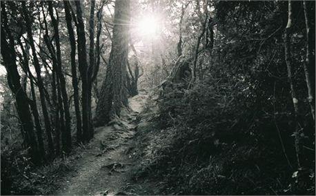 light in forest_2.jpg